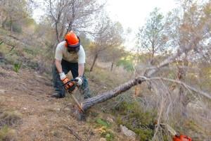 Medio-Ambiente_tala-pinos-plaga-tomicus-01-e1424083824213